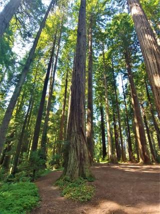 Redwood Eureka